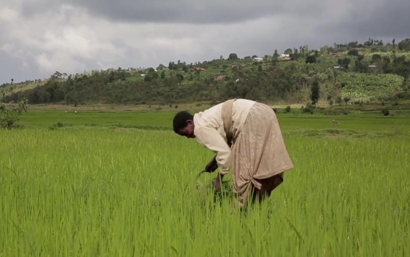 Rwanda, an African Metamorphosis
